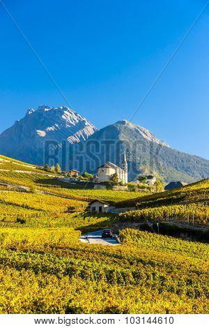 vineyards below church at Conthey, Sion region, canton Valais, Switzerland