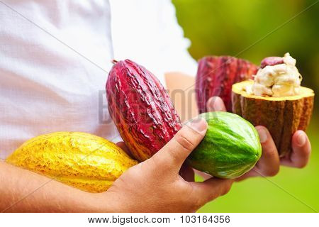 man holding the different sorts of colorful cocoa pods in hands poster