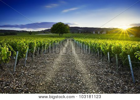 Sunset Time Over Vineyards Of Frontenas Village, Beaujolais, France