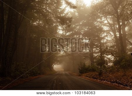 Foggy Drive Through The Forest
