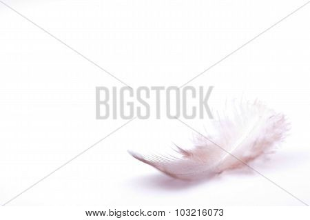 The small feather on a white background