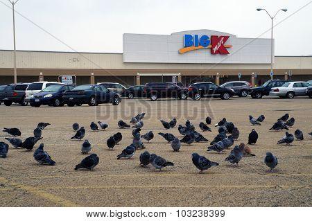 Pigeons at K-Mart