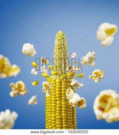 corncob explodes and produces popcorn