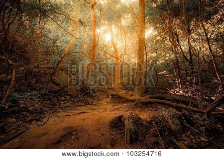 Fantasy tropical jungle forest in surreal colors. Concept landscape for mysterious background poster