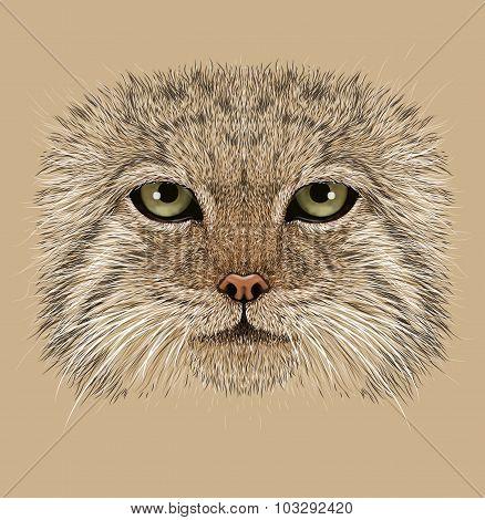 Illustrative Portrait of Pallas' Cat