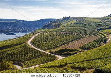 Mosel Vineyards Region In Autumn In Germany