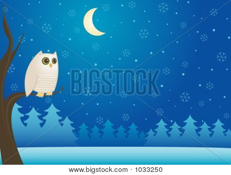 white owl perched on a branch in the cold winter night - moon and snowflakes in the dark sky poster