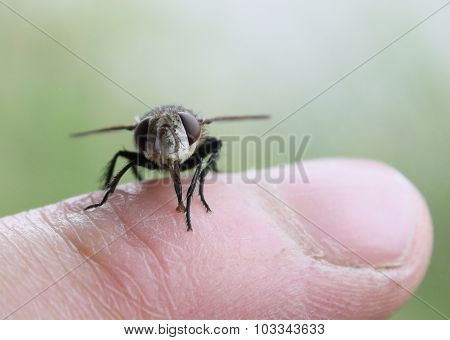 Fly On Finger