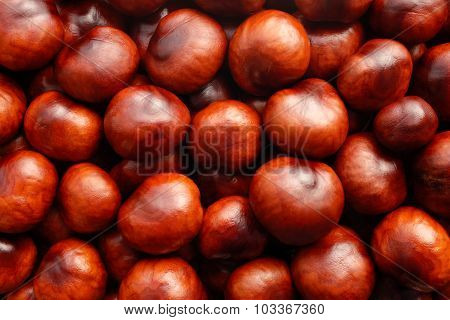 Rich Brown Autumn Conkers Background