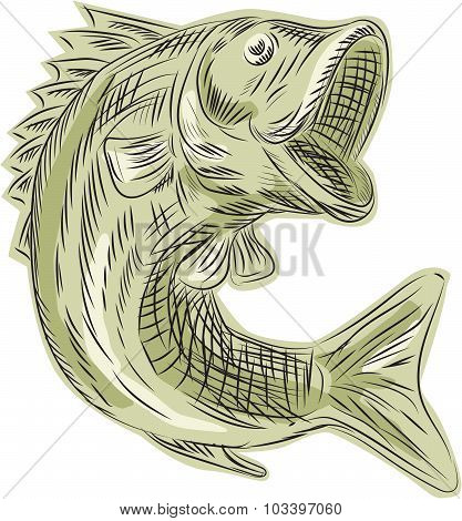 Etching engraving handmade style illustration of a largemouth bass fish viewed from the side set on isolated white background. poster