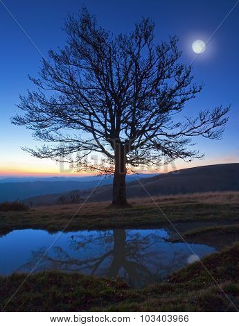 Lonely Autumn Naked Tree On Night Mountain