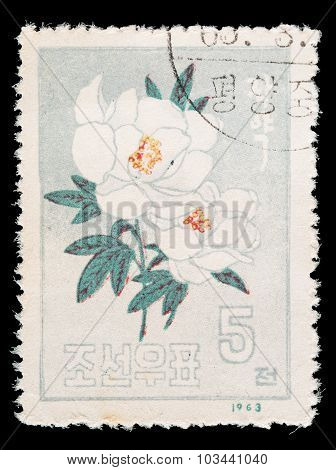 Postage Stamp Printed In North Korea Shows A Japanese Rose