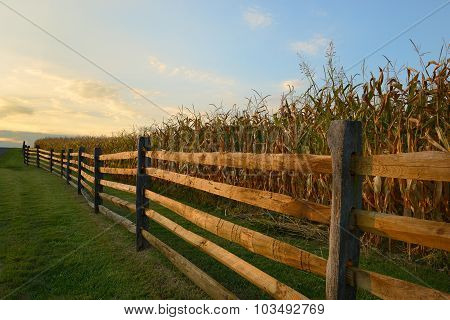 Fence Along Corn Field at Sunset