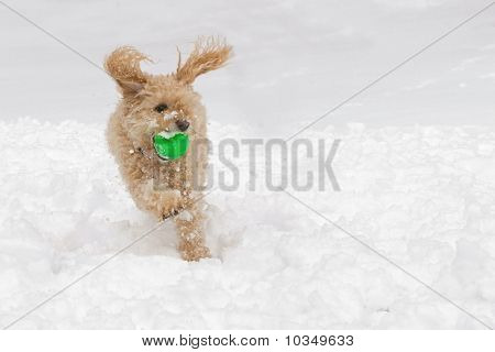 Dog playing ball in the snow