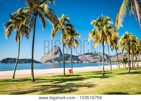 Palms tree on Botafogo beach and Sugarloaf  mountain in Rio de Janeiro, Brazil.