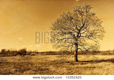 Lonely Autumn Oak Tree Retro Photo