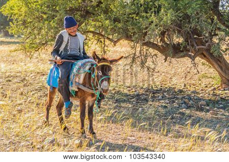 TAROUDANT, MOROCCO, APRIL 9, 2015: Local farmer poses on donkey with argan trees in background