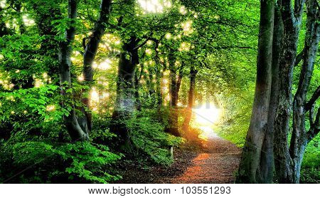 Evening Sunlight Through Trees Chilterns United Kingdom