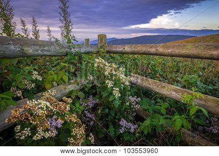 Wildflowers and Fence Along The Appalachian Trail