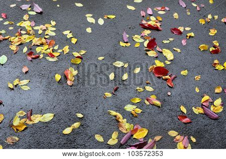 Abstract Background. The Sidewalk In The Fall During A Rain.
