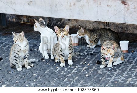 Group Homeless Cats