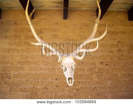 Elk Head And Antlers