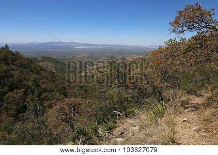 Madera Canyon View