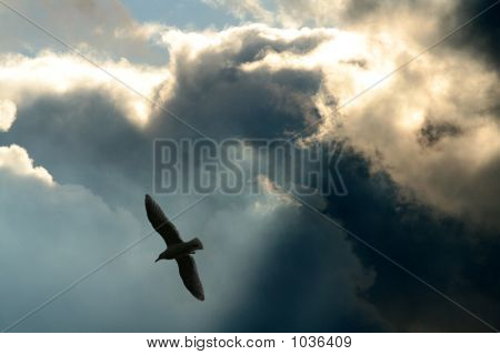 poster of rays and clouds the concept of freedom
