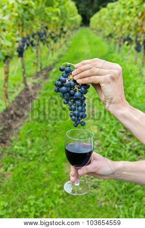 Hands Holding Bunch Of Grapes And Wine Glass