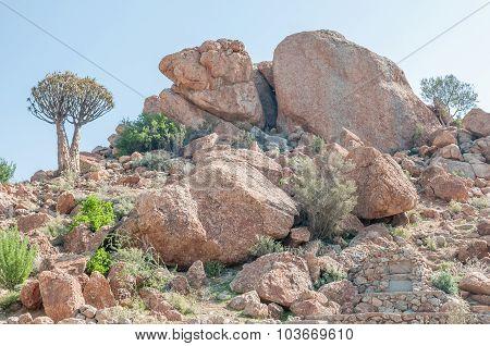 Orbicular Granite At Orbicular Hill Near Concordia