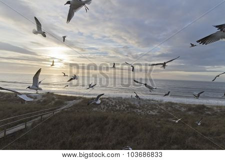 Raucous Seagulls, Twilight Beach And Distant Beachcomber