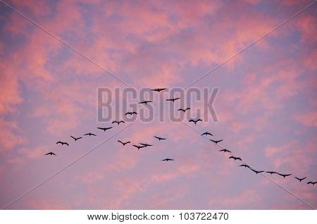 herd of birds flying at sunset