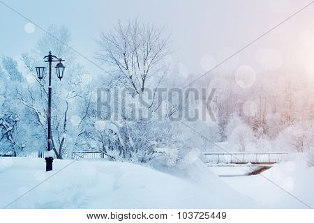 Winter background, landscape. Winter trees in wonderland. Winter scene. Christmas, New Year background