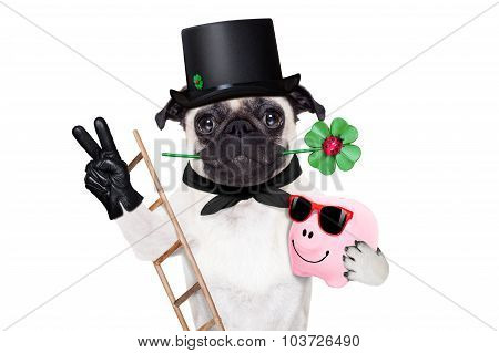 pug dog as chimney sweeper with four leaf clover celebrating and toasting for new years eve isolated on white background poster