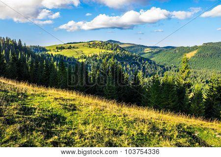 Coniferous Forest In Romaninan Mountain  At Sunrise