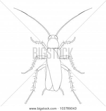 Blattella Germanica. Cockroach. Sketch Of Cockroach. Cockroach Isolated On White Background. Cockroa