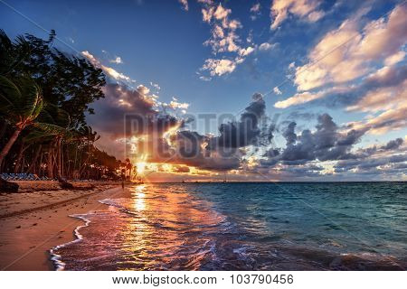 Palm trees along the beach, blue water, pastel coloured sky, during sunset