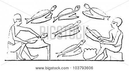 Fishmonger, vintage engraved illustration.