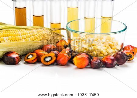 Maze Corn And Oil Palm Derived Biofuel In Test Tubes.