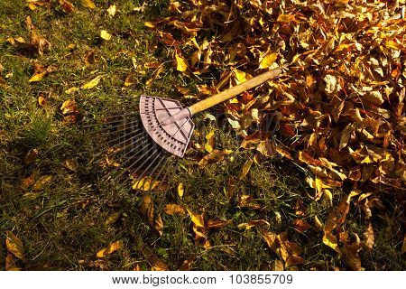 Pile Of Fall Leaves With Rake.