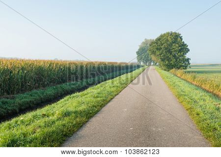 Country Road With Trees In A Rural Setting