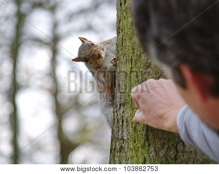 Man giving food to a squirrel on a tree