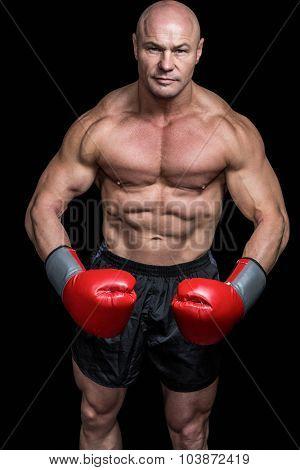 Portrait of boxer flexing muscles against black background poster