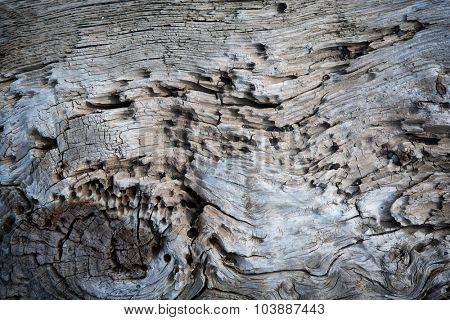Rustic old drift wood log texture.