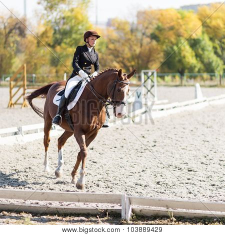 Young Horse Rider Girl At The Dressage Competition