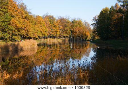 Autumn Pond In Park