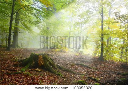 Undergrowth Of The Forest