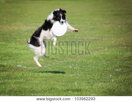 a cute dog in the grass at a park during summer catching a disc