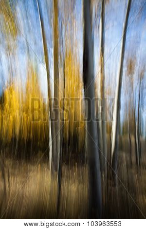 Abstract Aspen Trees