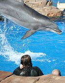 a dolphin interaction - dolphins performing flips and jumps. poster
